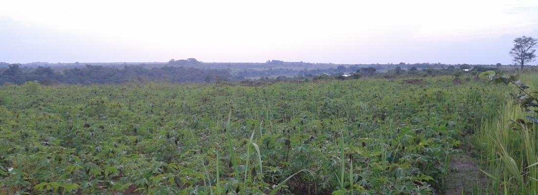 Coltivazione di manioca, mais e legumi tropicali a Makoua