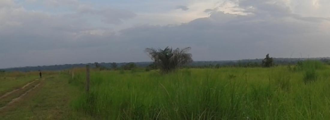 Coltivazione di manioca, mais e legumi tropicali a Makoua 1